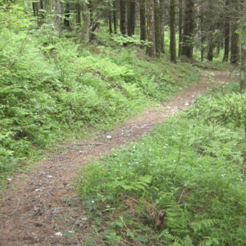 Percorsi Mountain Bike sull'alpe Nevegal (BL)